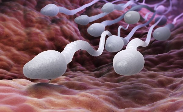 is sperm healthy