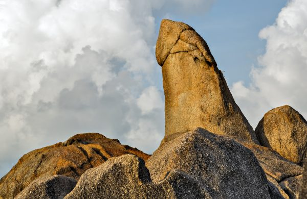 worlds largest penis